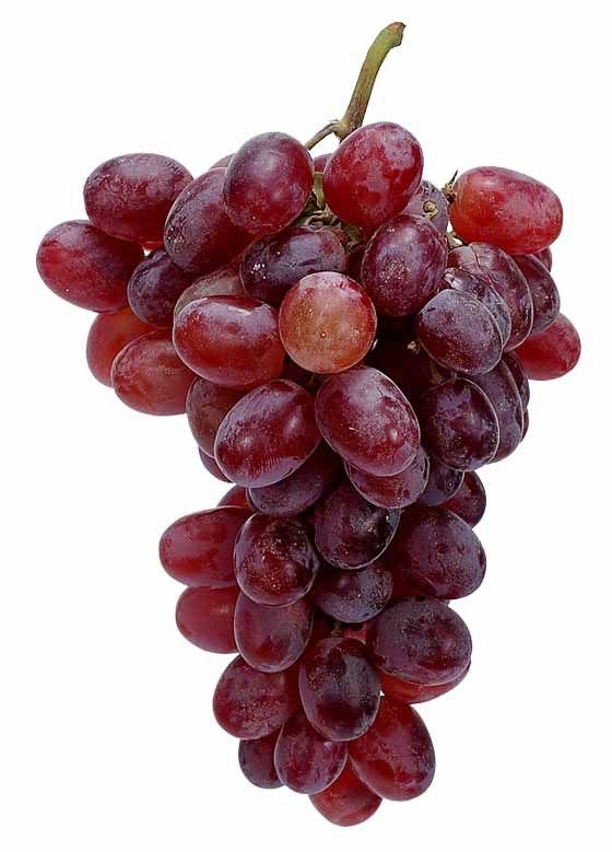Виноград Йорк-Мадера